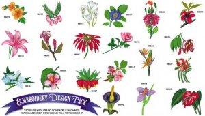 Коллекция экзотических цветов