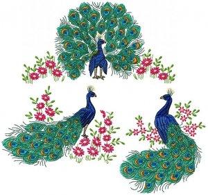 Подарок для подписчиков - Peacock Set